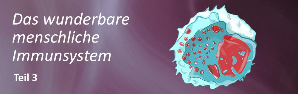Immunsystem Blogbeitrag Teil 3